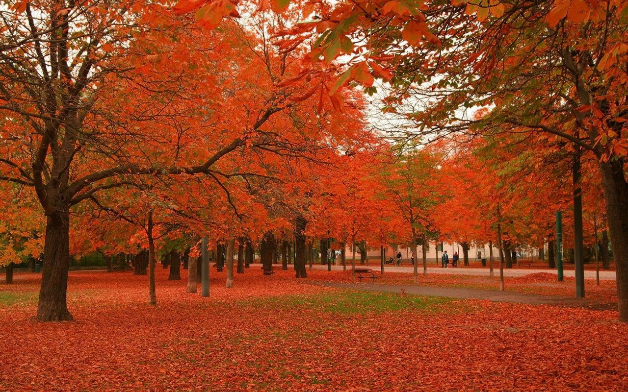 秋天风景背影图片